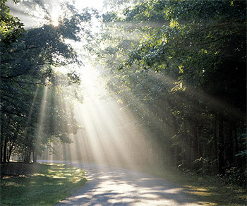 The Light >> Walking In The Light Wholehearted Men